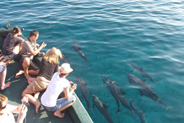 Excursie cu delfinii Maldive