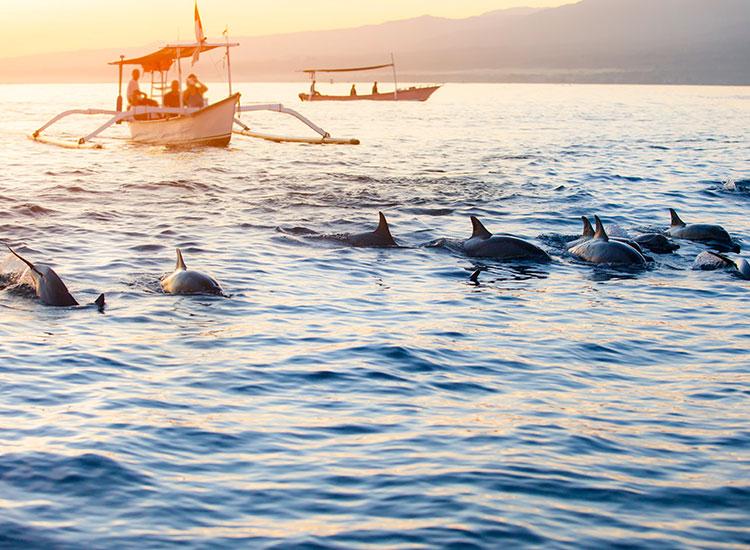 Intalnire cu delfinii