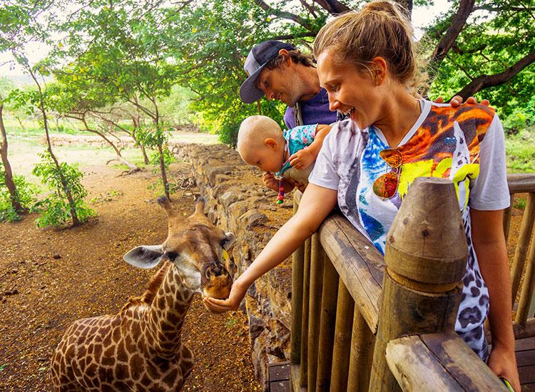 girafa in Parcul Casela Wildlife Mauritius