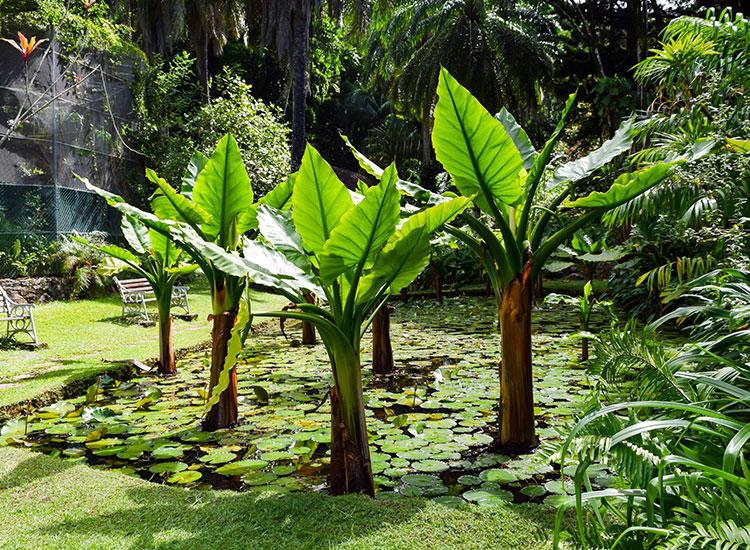 Tur al Gradinii Botanice Nationale din Seychelles