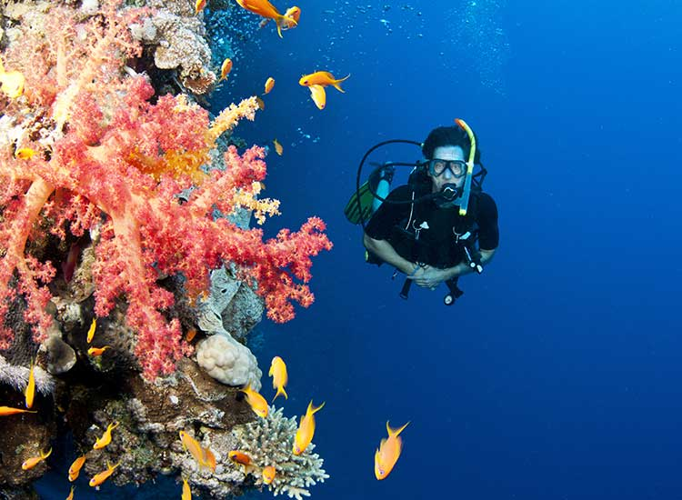 Explorati reciful de corali