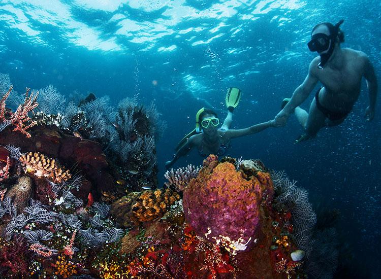 Snorkeling in Anse Lazio