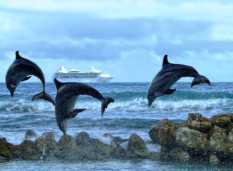 Croaziera de admirare a delfinilor