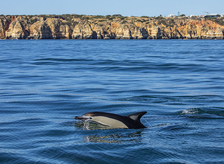 Croaziera de Vizionare a delfinilor