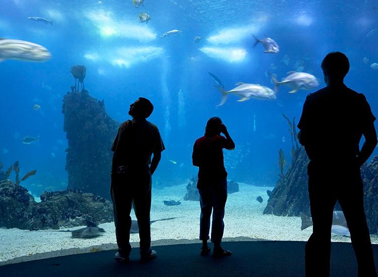 Oceanarium Lisabona