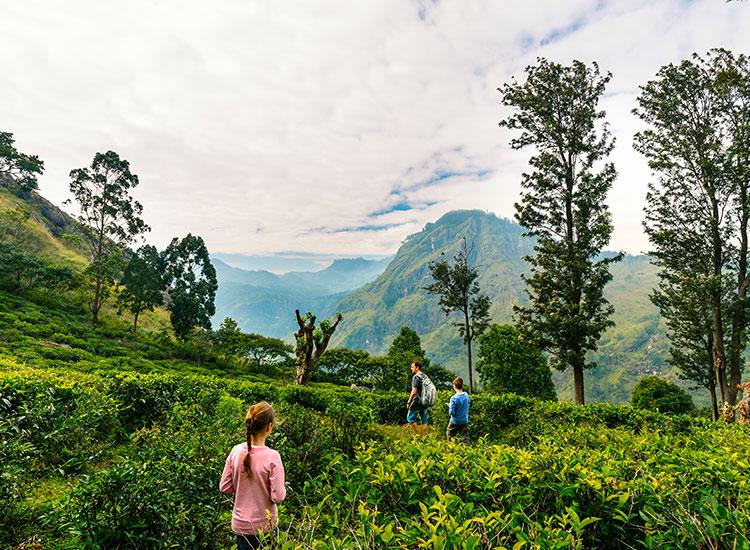 Vizitati o plantatie de ceai din Nuwara Eliya