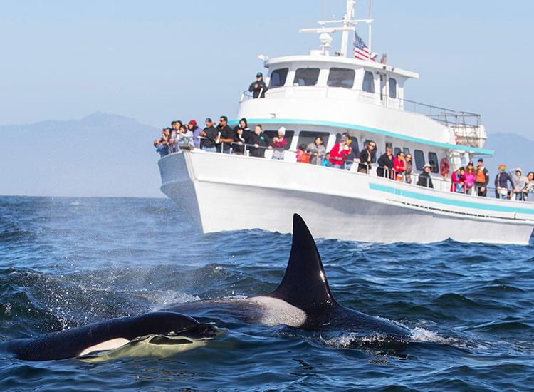 Intalniti-va cu balenele