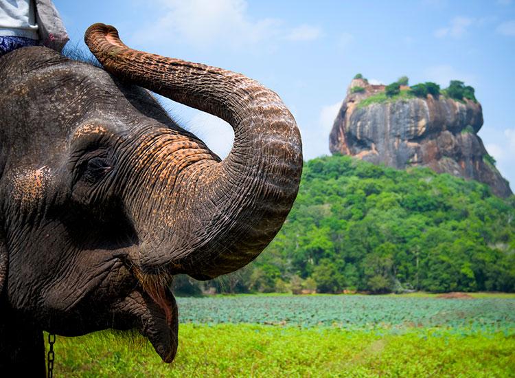 Intalnirea cu elefantii