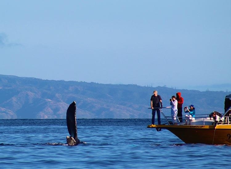 Observarea de balene